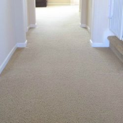 2-carpet-450x380